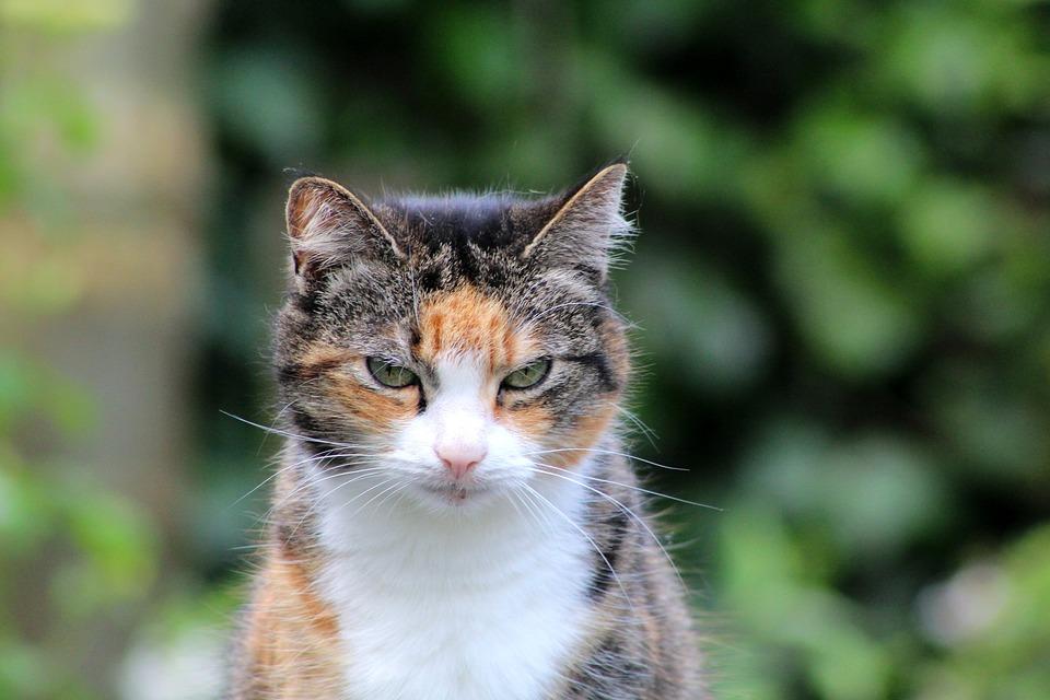 vieux-chat