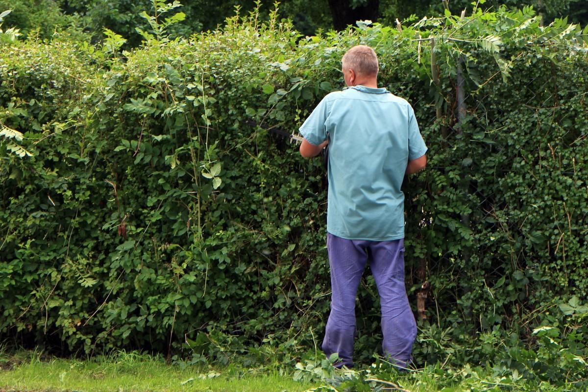 tailler-arbuste